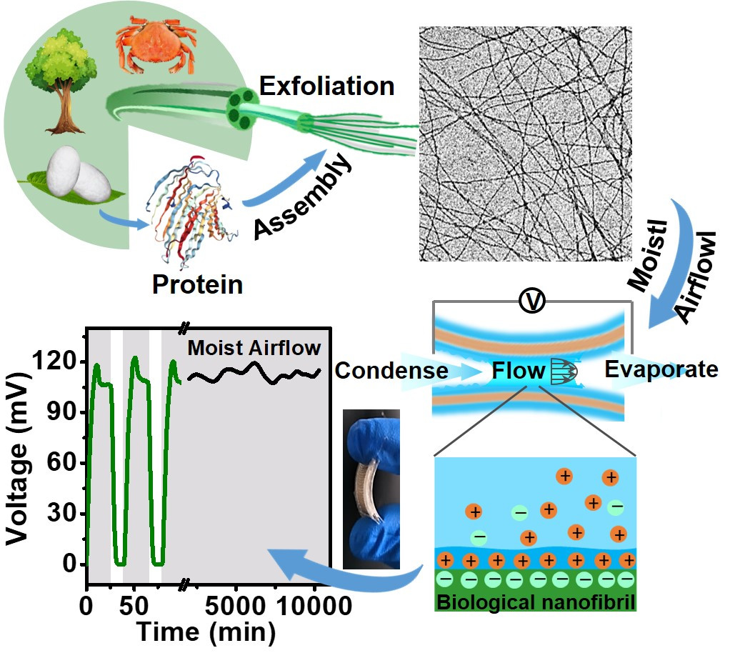 Biological Nanofibrous Generator for Electricity Harvest from Moist Air Flow, M Li, L Zong, W Yang, X Li, J You, X Wu, Z Li, C Li, Advanced Functional Materials, 2019, 1901798