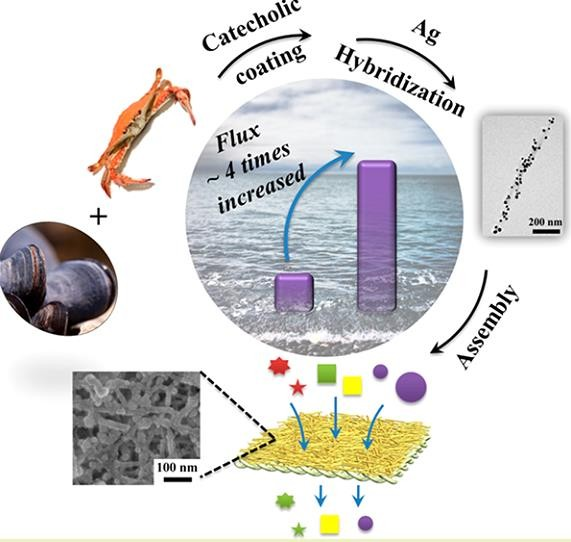Catecholic coating and silver hybridization of chitin nanocrystals for ultrafiltration membrane with continuous flow catalysis and gold recovery. Wang, Y., Zhu, L., You, J., Chen, F., & Li, C. (2017). ACS Sustain. Chem. & Eng, 5(11), 10673-10681.