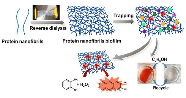Supramolecular proteinaceous biofilms as trapping sponges for biologic water treatment and durable catalysis. Wu, X., Han, X., Lv, L., Li, M., You, J., & Li, C. (2018).Journal of colloid and interface science, 527, 117-123.